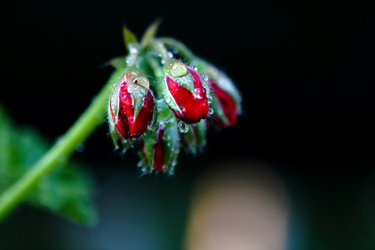 IMG_1098 red